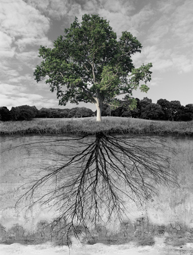 08_11_roots