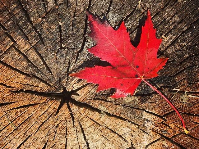 Quando cadono le foglie rosse