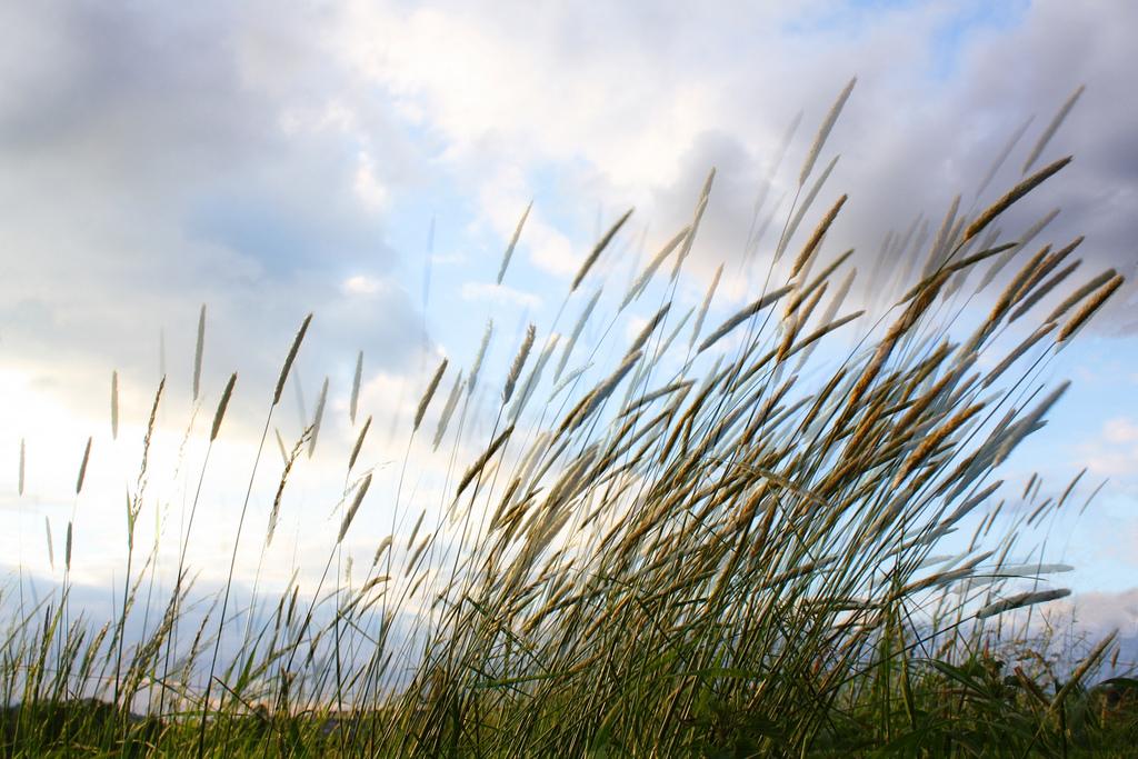 Soffio di vento