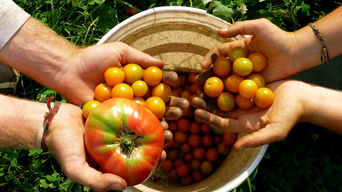 La Calabria al primo posto per numero d'imprese con certificazione biologica